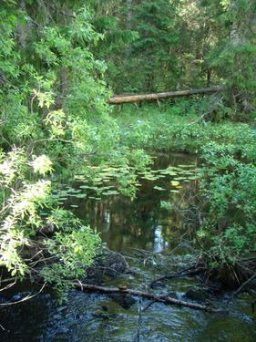 Prastgardens hagmarker skyddas blir naturreservat